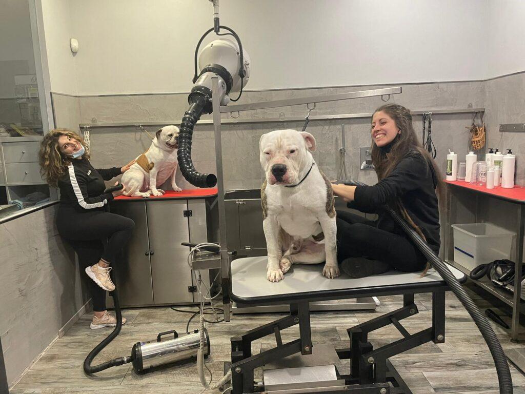Toelettatura Beauty Dog di San Salvo (CH)